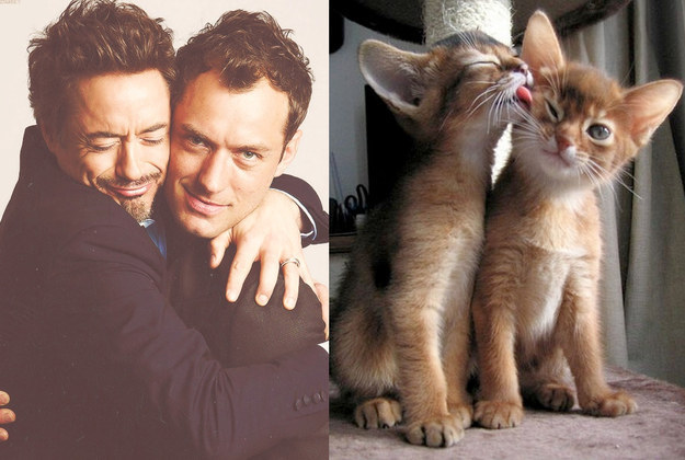 15. Robert Downey Jr. And Jude Law Vs. Cat And Cat