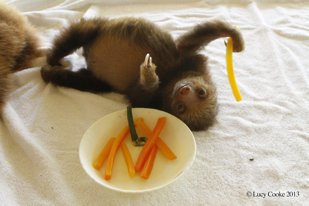 8. Hungry sloths.