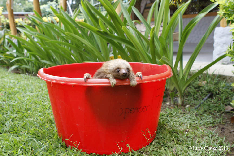 16. Trying to get out of a bucket.