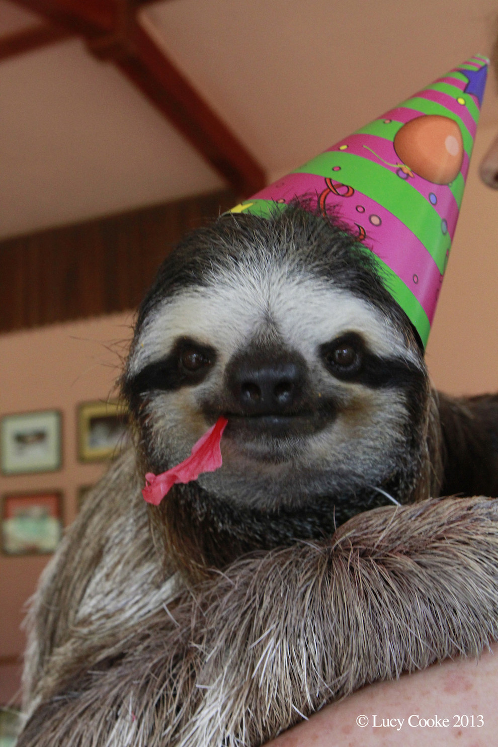 3. Lucy wants us all to celebrate sloths.