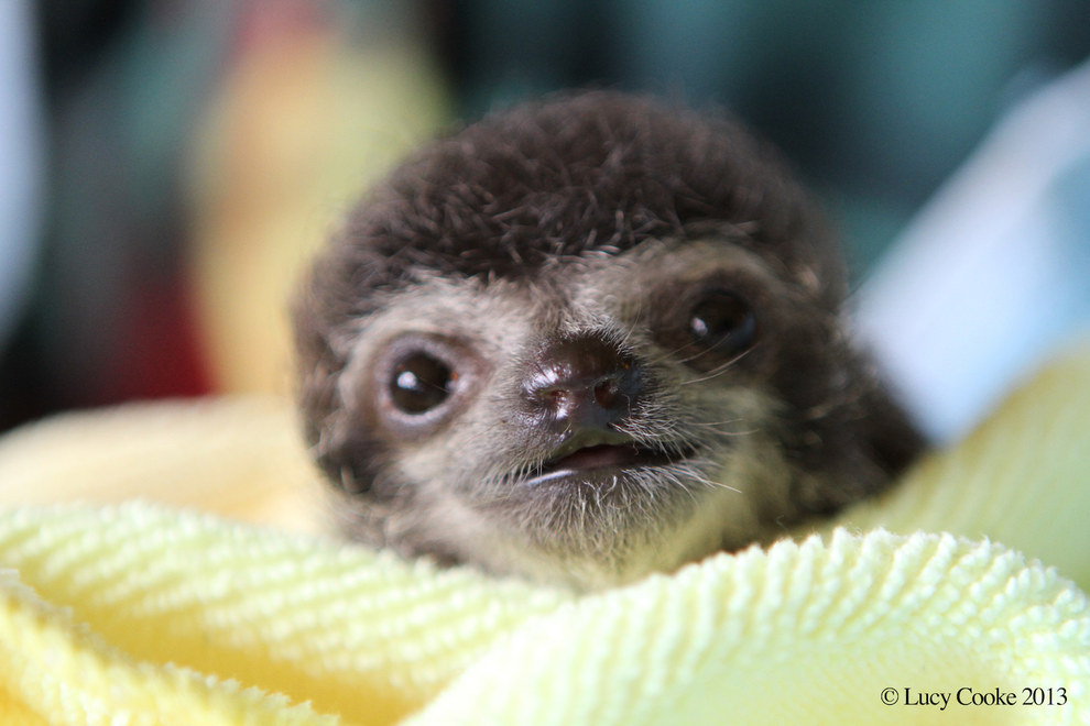 2. The British filmmaker, photographer, zoologist founded the Sloth Appreciation Society.