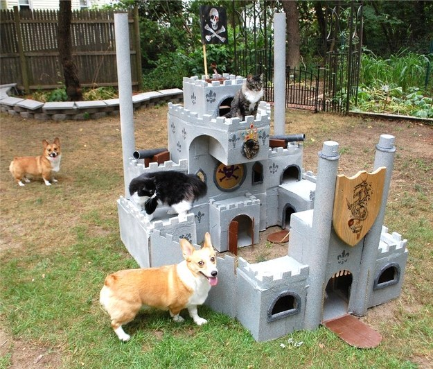 """10. """"The Corgis have us surrounded! The sanctity of the fort has been compromised!"""""""