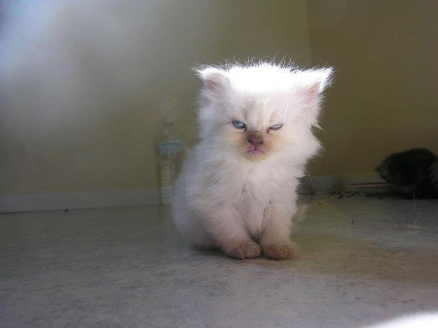 87. Disaffected Kitten