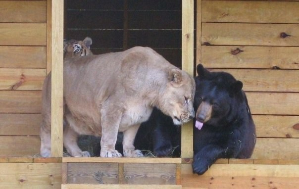 3. Georgia Department of Natural Resources brought the animals to Noah's Ark and they slowly regained their health.