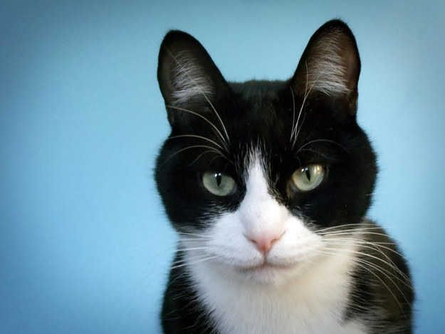 "5. The furry tufts on the inside of cats' ears are called ""ear furnishings""."