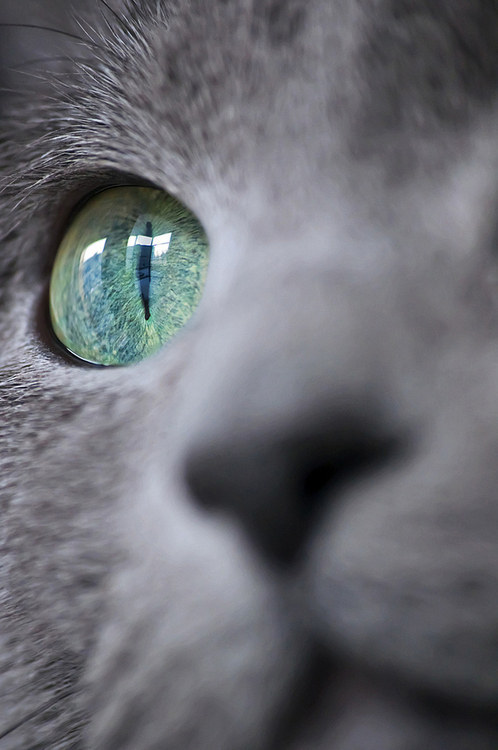 "20. Cats have a third eyelid called a ""haw"". It's generally only visible when they're unwell."