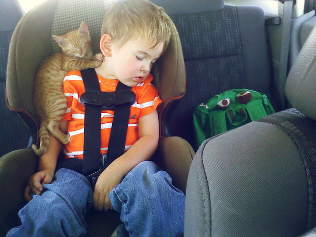 89. Cat Asleep on a Boy in the Back of the Car