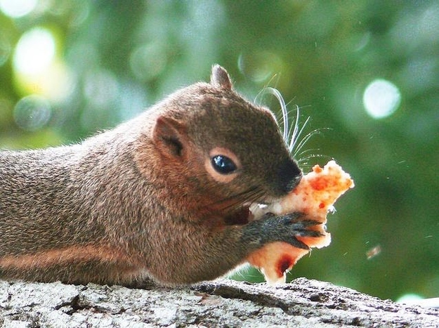 """13. """"It's my last bite, dude, just let me finish this in peace."""""""