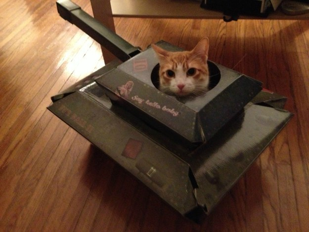 """11. """"It'd be wise to not mess with this fort, y'all."""""""