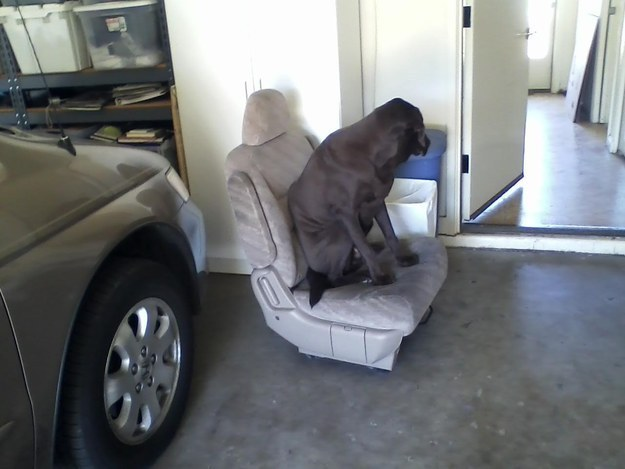 Um… I think you're doing it wrong, Dog.