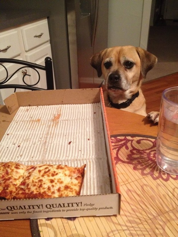 9. MAYBE YOU COULD HAVE SOME PIZZA IF YOU HAD A JOB.
