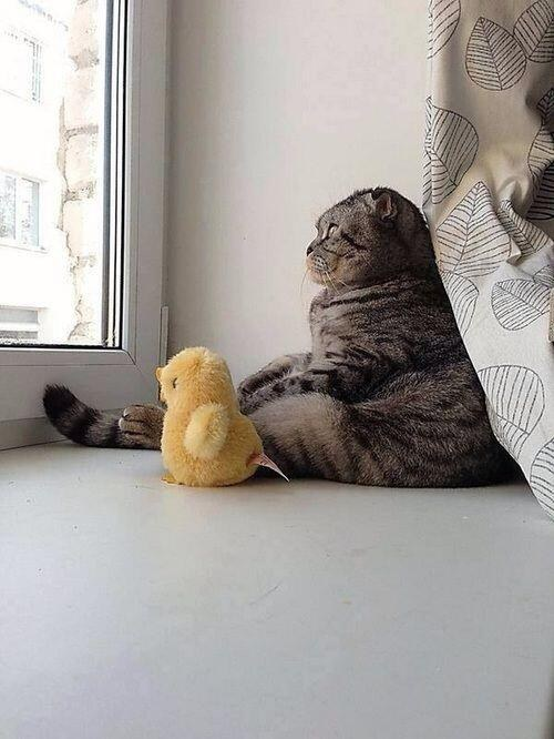 96. The Existential Cat with His Existential Duck