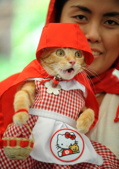 49. The Little Red Riding Hood
