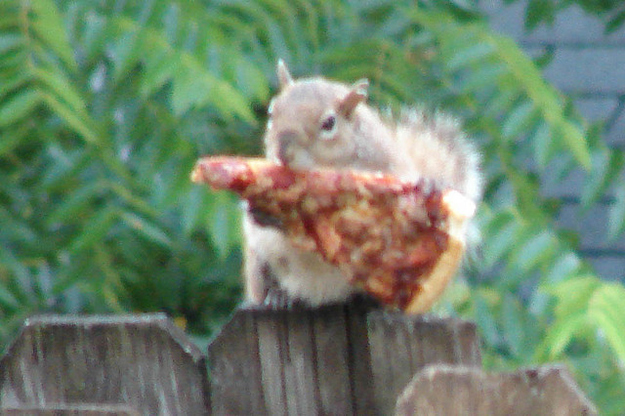 Massive Database Of Squirrels Eating Pizza Uncovered