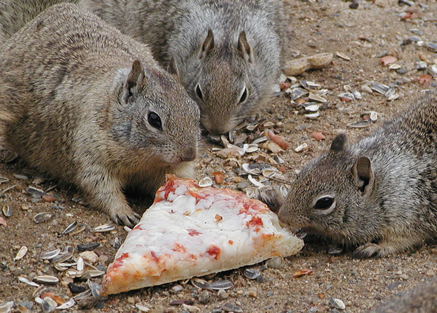 """6. """"We understand that it's not delivery. We're squirrels, not idiots."""""""