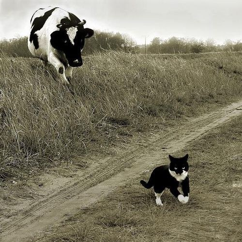 73. Cat and Cow, Cow and Cat