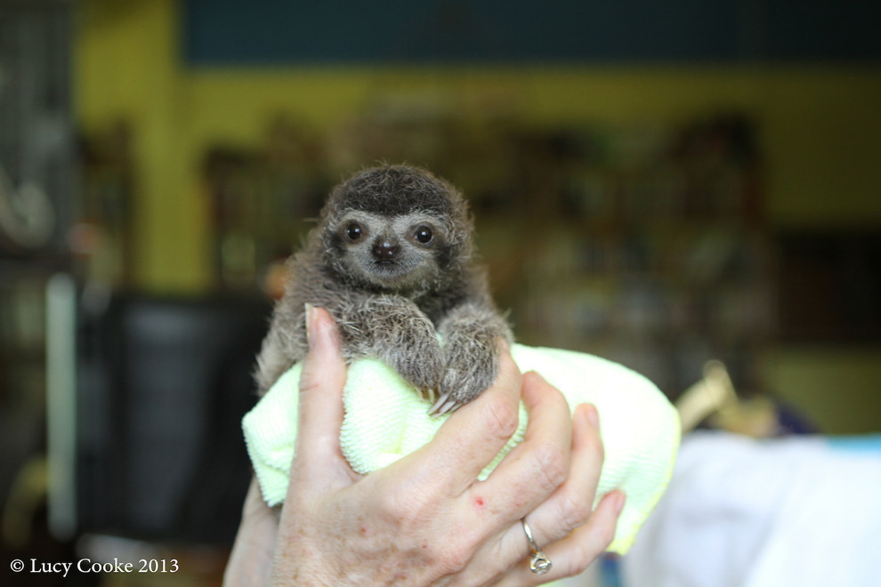 4. To value sloths of all natures.