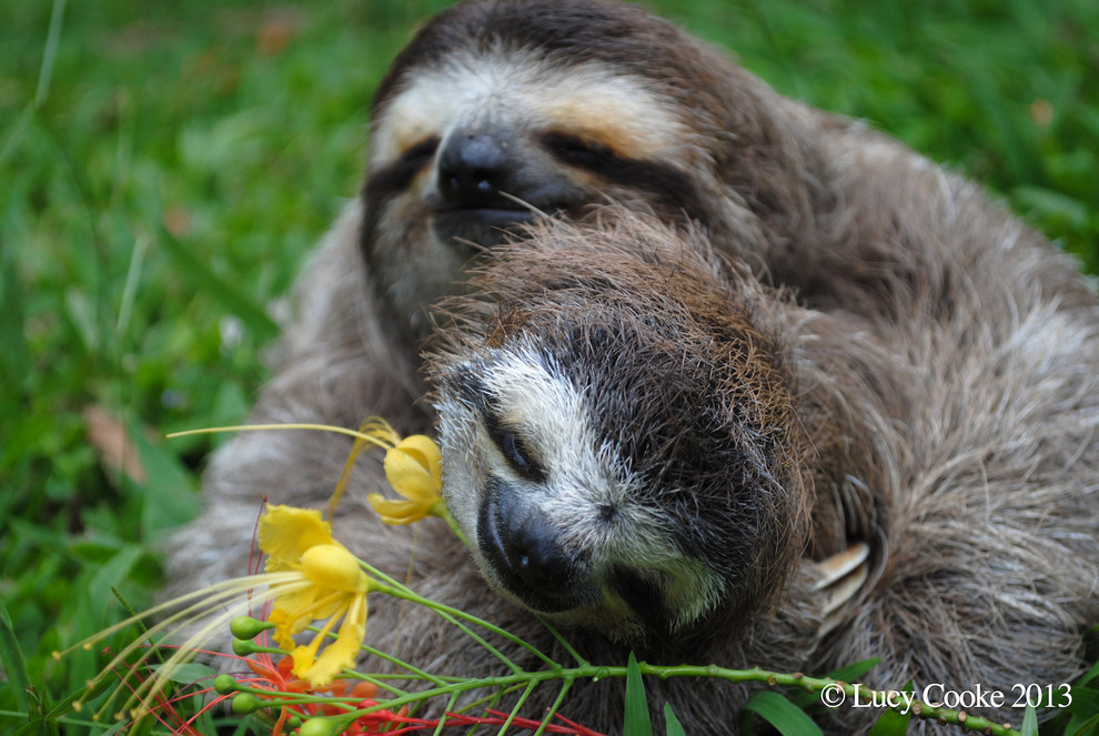 1. Lucy Cooke loves sloths.
