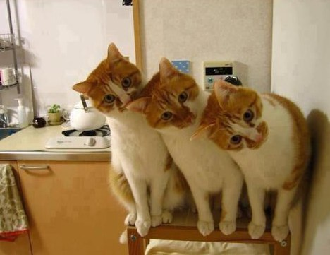 17. These attentive triplets.