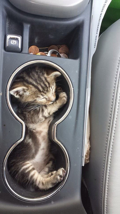 8. This perfect cat in his holder.
