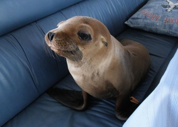13. Animals love to hang out on the sofa with you.