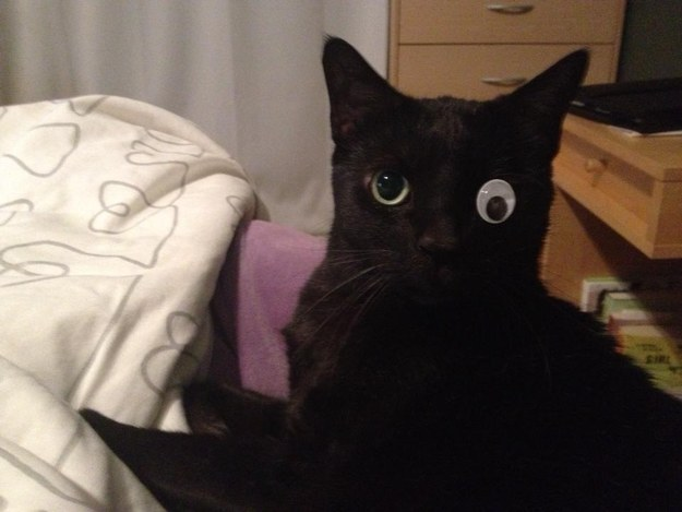 15. The one-eyed cat with the hilarious owners.