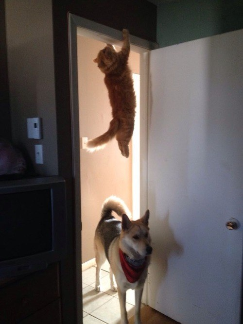 2. The cat who watched one too many episodes of Mission Impossible.