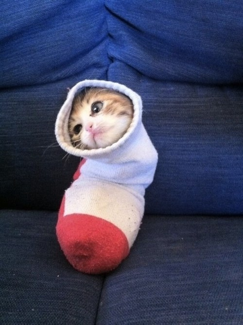 17. The cat who knows where your other sock went but will never tell.