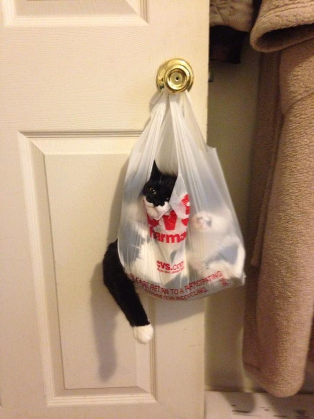 1. The cat who took on a bag that was too smart for him: