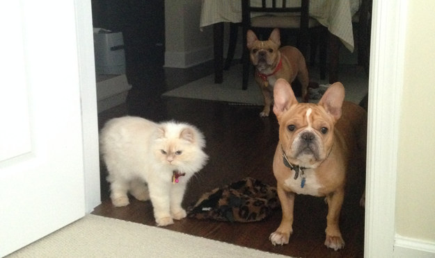 10. Animals will politely wait outside the door for you.