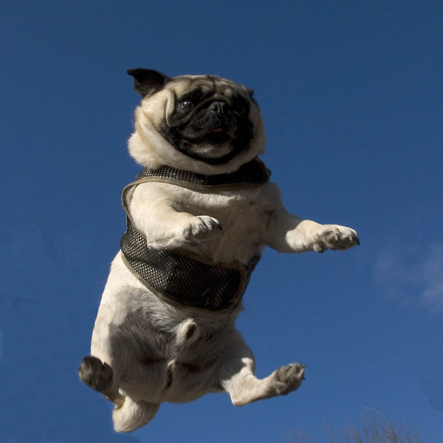 """16. """"Nothing freer than chubs in the air!"""""""