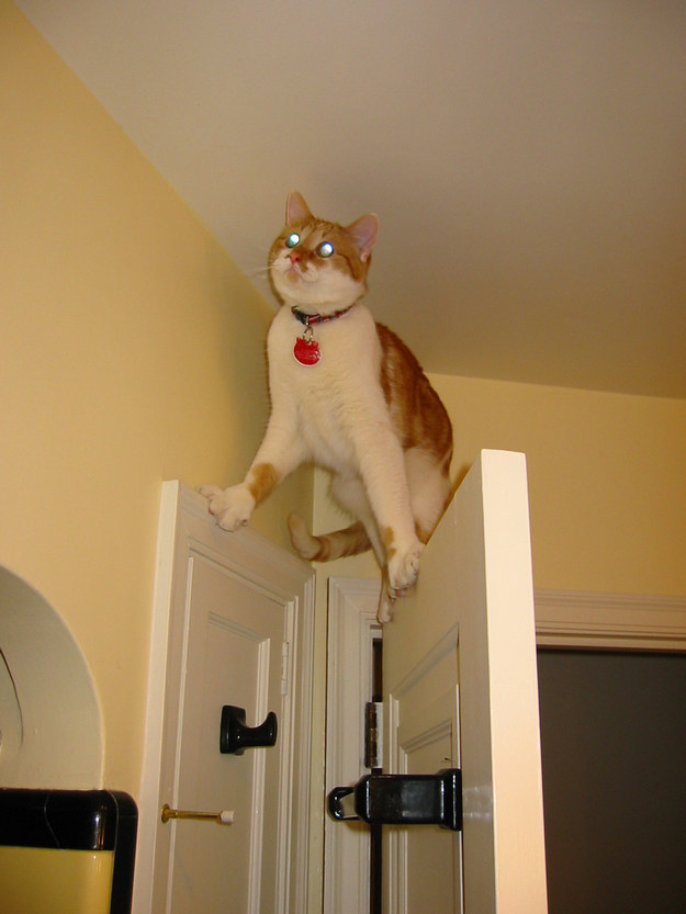 5. The cat whose single-minded pursuit of a laser dot caused him to momentarily take leave of his senses.