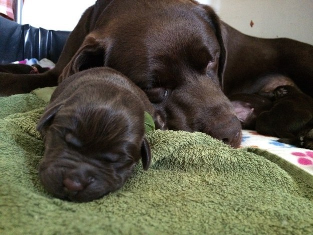 21. This mother and her newborn pup.