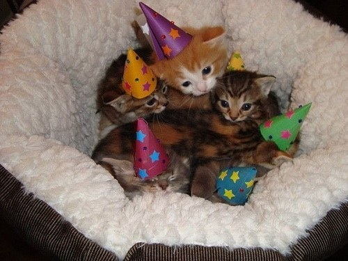 19. This kitten party.