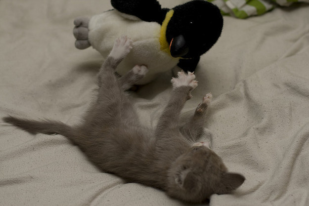 24. This kitten and her penguin.