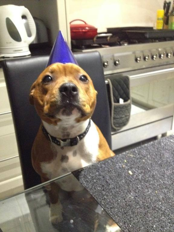 25. This patient birthday boy waiting for his birthday cake.