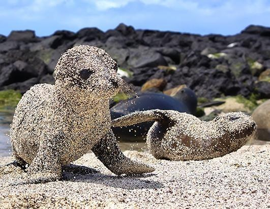 9. Animals don't mind getting covered in sand.