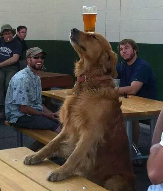 2. Animals are always loads of fun at the bar.