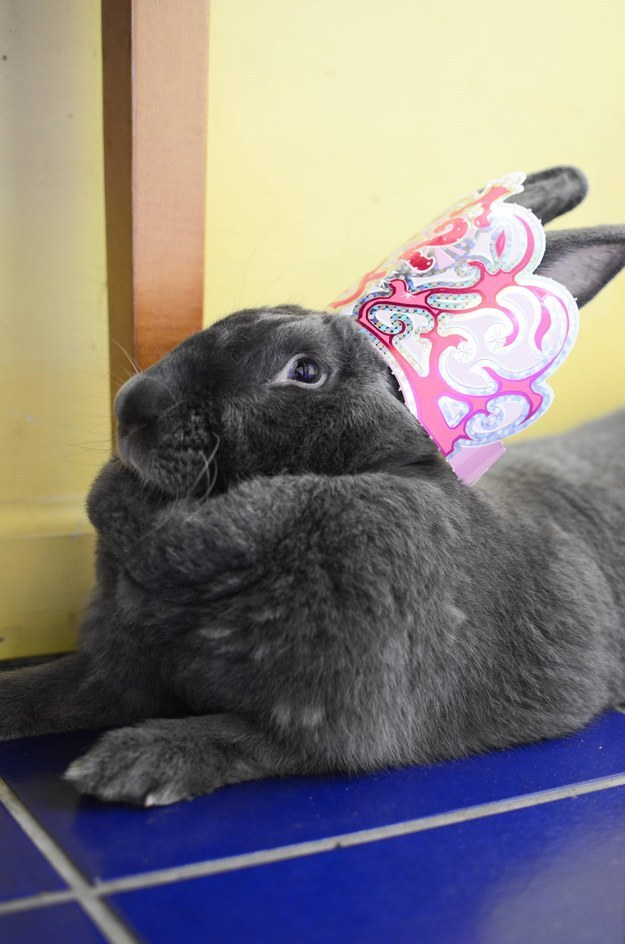 40. This bunny who knows she is QUEEN.
