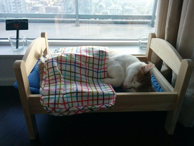 11. Animals are completely adorable when they're sleeping.
