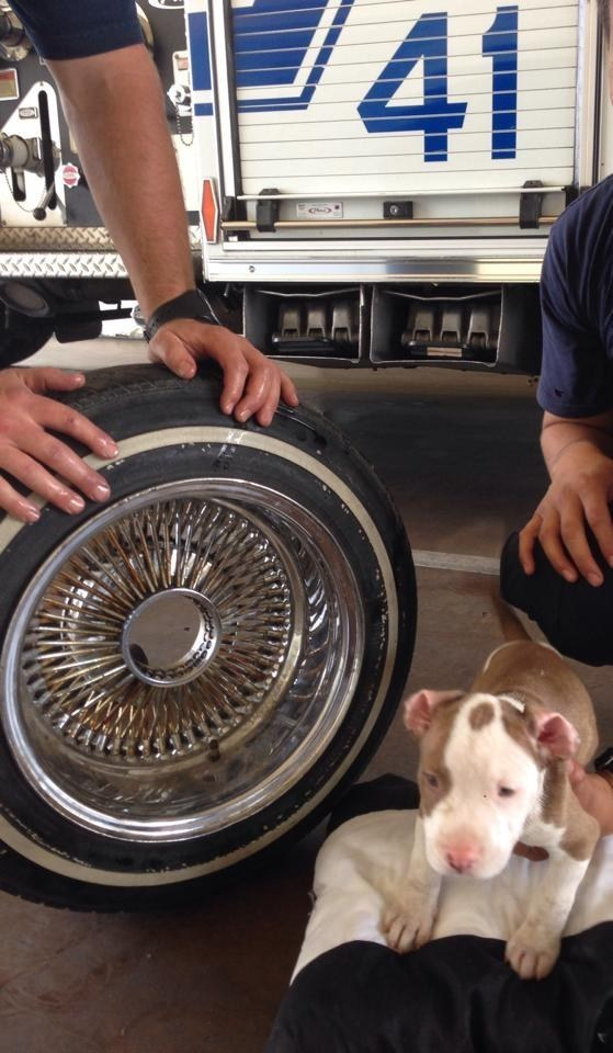 Firefighters were able to slip the puppy's head out of the hole with the help of a little vegetable oil.
