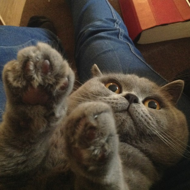 27. This kitty who is trying to joke but can't help but be adorable.