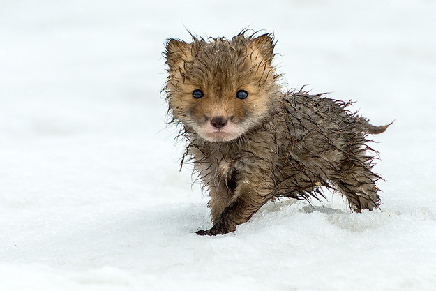 8. You still want to hug damp animals.