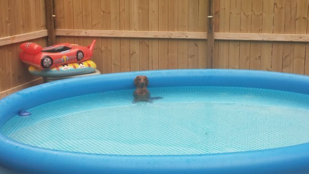 4. Animals know how to behave in the pool