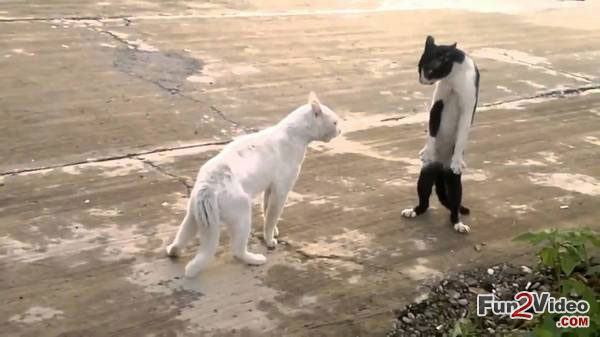Angry Cats Talking