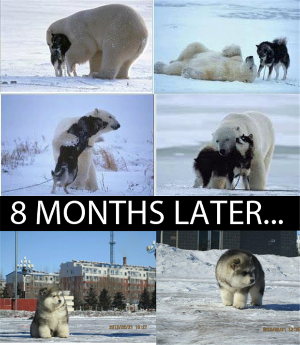 Attack Of The Funny Animals – 35 Pics