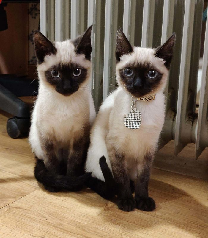 brother and sister cats